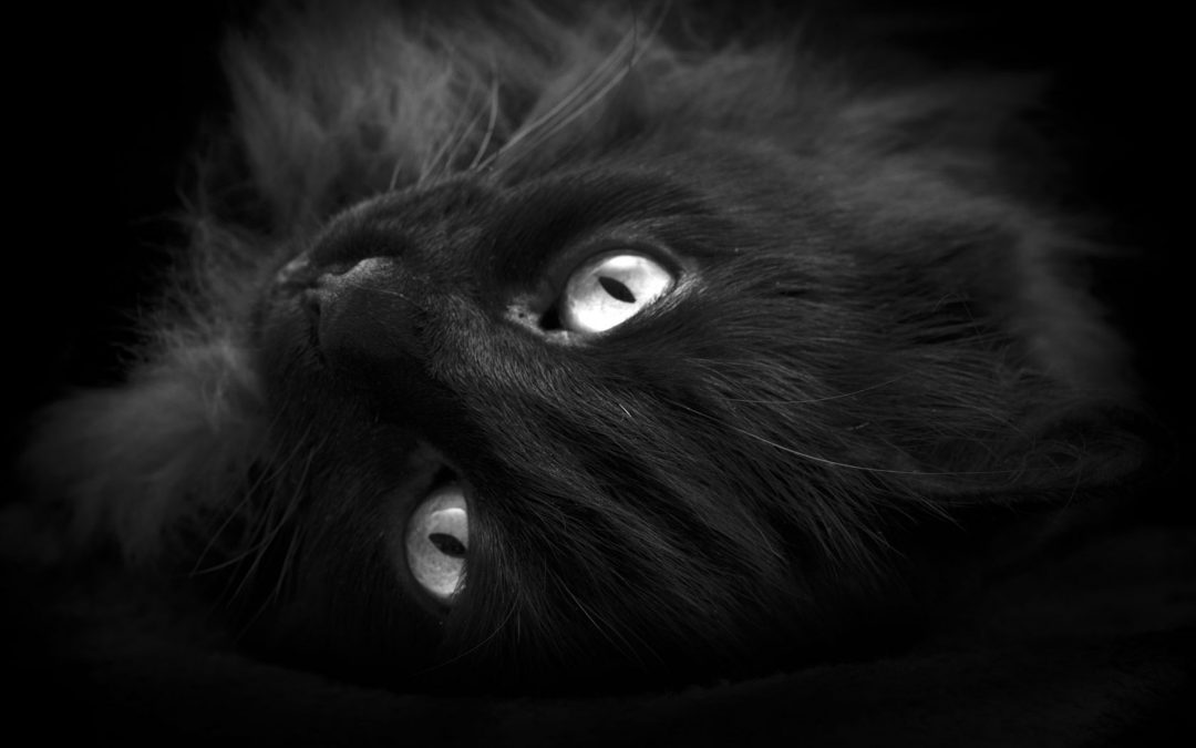 """Narrated version of Poe's """"The Black Cat"""""""